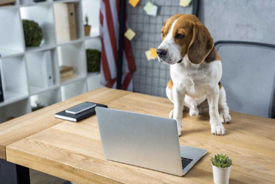 Hund vor einem Laptop